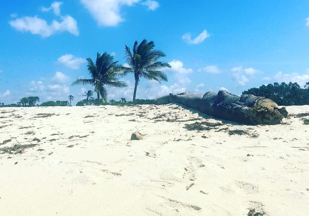 Kenia Kwale Tiwi Beach Strand Amani Tiwi Beach Kongo River Fluss Badestelle