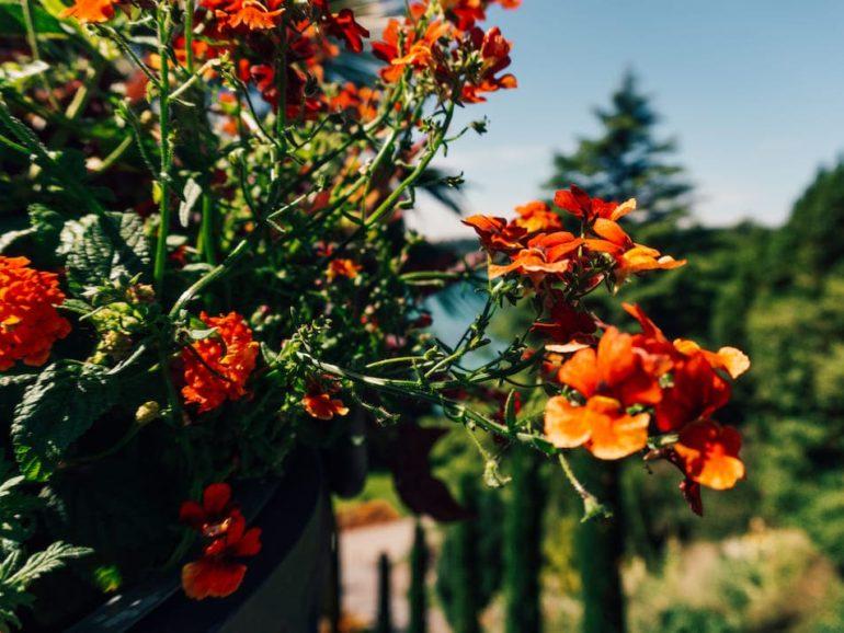 Insel Mainau Reisetipps Ausflugsziel Bodensee Blumen Eintritt